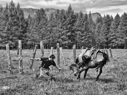 robert Tofalarski konj