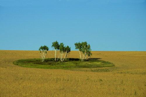robert Nebo, šuma, krug