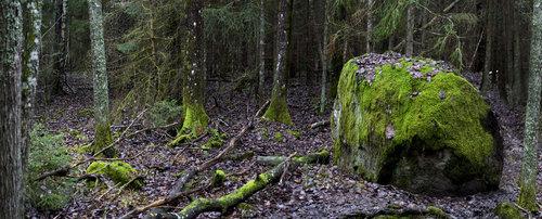 robert Skandinavska šuma