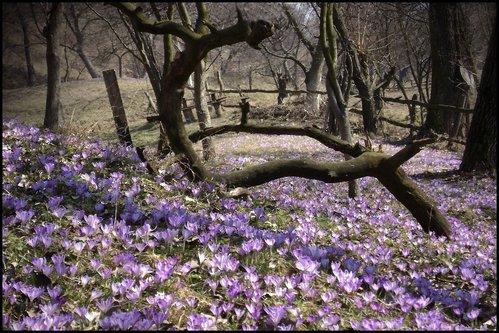 selim proljeće