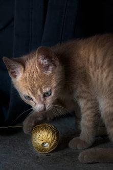 silly_quasar Smoki, plavooki mačor