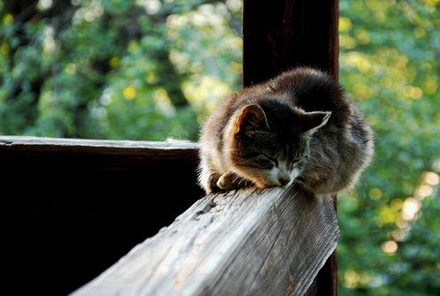sladja spava mi se
