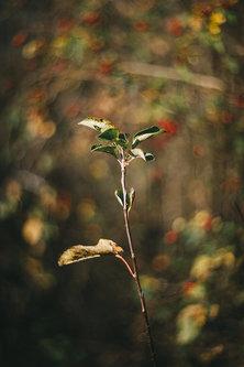 srkiscuderia Jesenji motiv