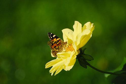 srkiscuderia Leptir