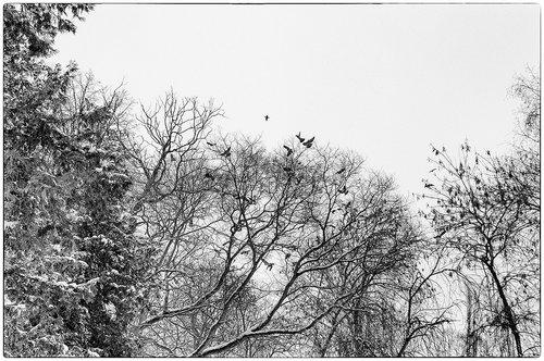 strkov Scena iz parka