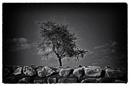 sudik osameno drvo