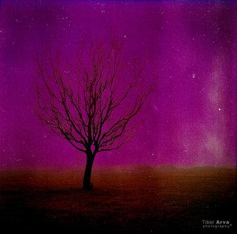 tibor-arva Samo drvo