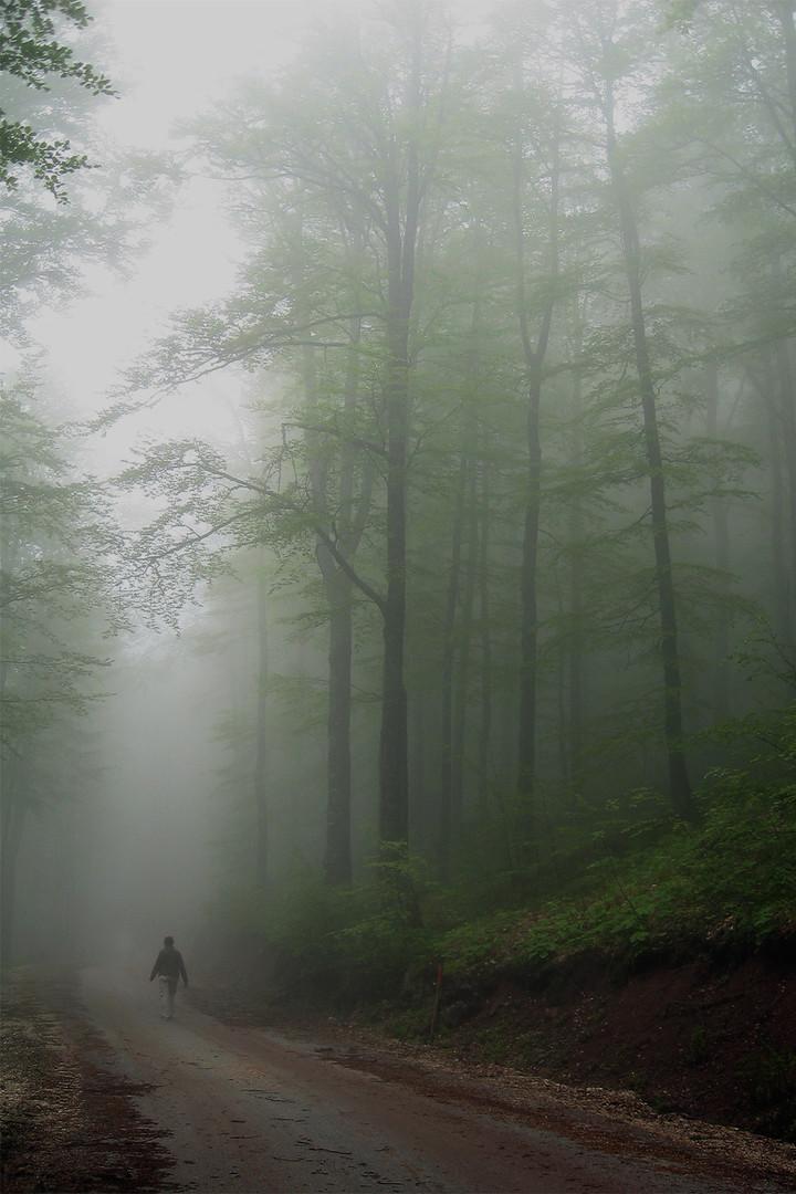 Kroz maglu