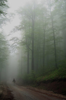 vasa_kz Kroz maglu