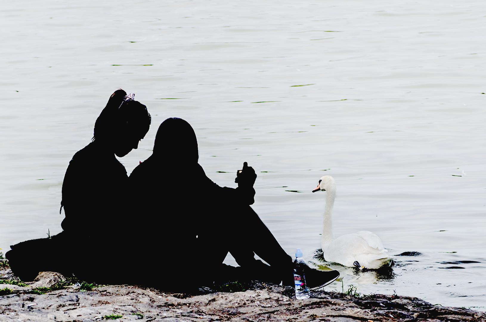 Na obali Dunava 2017 1