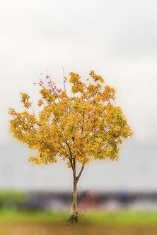 vemapn Drvo oraha u oktobru 2015 2.fr