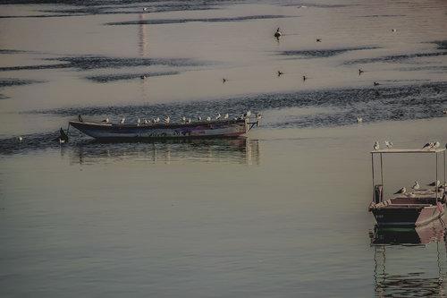 vemapn Dunav u smiraj fr