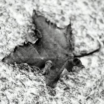 vesnasvesna Fall