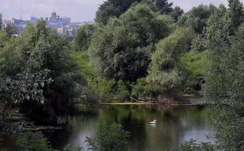 vlada Beogradsko labudovo jezero