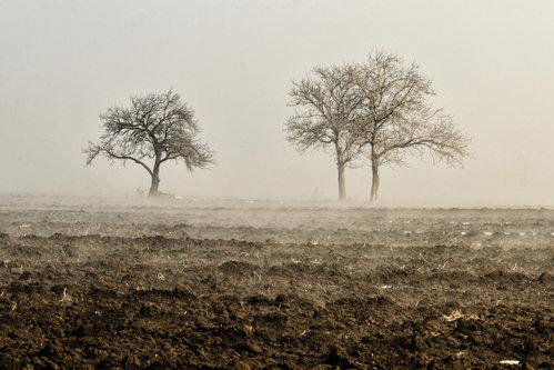 zeljanplavi Izgubljenu magli